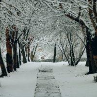 Весенний парк :: Ольга Конанкова