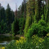 природа :: Алексей Golovchenko