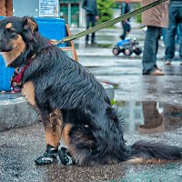 Модный пёс. :: Татьяна Загара