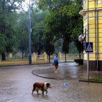 Майский дождь. :: Slava Slashi