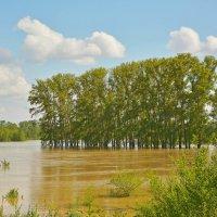 Затопленные берега :: юрий Амосов