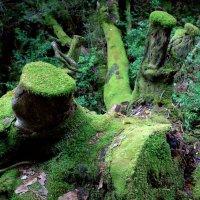 В тропическом лесу Якусимы :: Геннадий Мельников