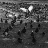 Где наша еда?! :: Андрей Качин