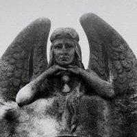 Ангел :: Сурикат Сусликов