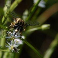 очень маленькие цветы ! :: Сергей Васильев