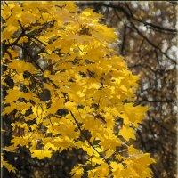 Золотая осень. :: Борис Койнов