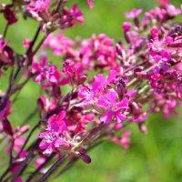 полевые цветы, полевые цветы..... :: Светлана
