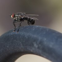 Вот,муха... :: Ирина Елагина