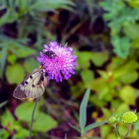 Бабочка и цветок :: Юрий Стародубцев