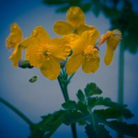 Желтый цветок))) :: Роман