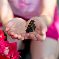 бабочка в ладошках :: Светлана Лагутина