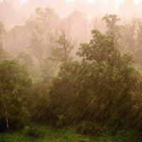 Летний дождь в городе моем. :: Юрий Савинский