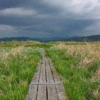 К озеру...., на встречу к грозе. :: Наталья Юрова