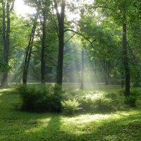 Утро в парке :: Анюта Румянцева