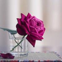 роза :: Slava Hamamoto