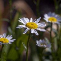 цветочное :: gribushko грибушко Николай