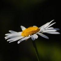 царица полей :: gribushko грибушко Николай