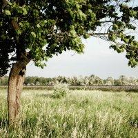 То самое дерево :: Виктория Власова