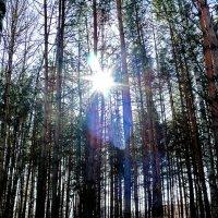 Полдень в лесу. :: Анатолий Борисов