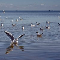 Чайки :: Elena Barkhatova
