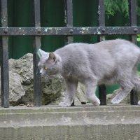 Кот на страже-1. :: Руслан Грицунь