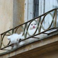 Кот лентяй-3. :: Руслан Грицунь