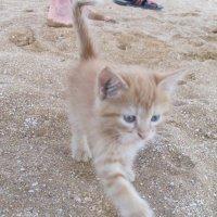 Котенок на пляже-1. :: Руслан Грицунь