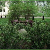 Весна в парке городском :: Ольга Кривых