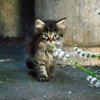 Котенок :: Дмитрий