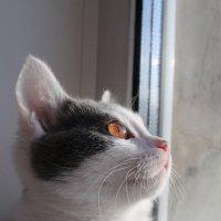 Янтарь-котенок :: Nadezhda Ulitina