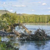 После паводка :: юрий Амосов