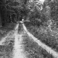 Дорожка в лес. :: Валерий Молоток