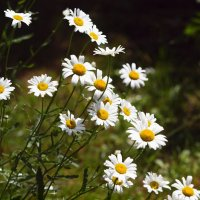 Цветы лета. :: Андрей Зайцев