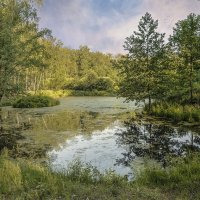 Островки лесного озера :: Светлана Васильева