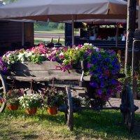 Полная телега цветов :: Viacheslav Birukov