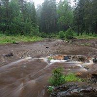 После дождя :: vladimir