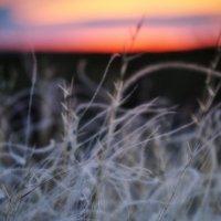 Закаты Юга.Вечерняя нежность :: дмитрий атаманюк