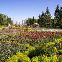 Тюльпановый рай :: Любовь Потеряхина