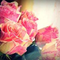 Мои цветочки :: Juliya Fokina