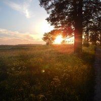 Летний закат :: Валерия заноска