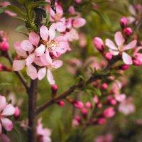 весна :: Татьяна Ковалькова