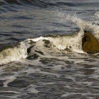 Волна :: Александр Котельников
