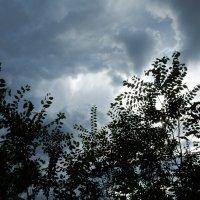Небо перед дождём :: Вероника Громова