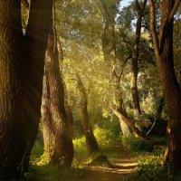 сказочный лес :: Виталий Исаев