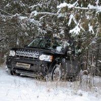 по зимнему лесу :: vg154