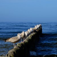 Seaguls :: Алексей Гимпель