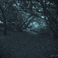в тёмно-сером лесу... :: Игорь Чичиль