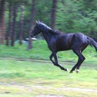 Летящий конь :: Светлана Попова