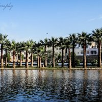 Пальмовый островок :: Yana Fizazi
