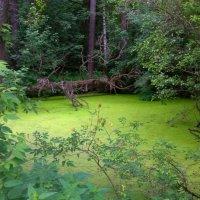 У поганых болот , чьи то тени встают ... :: Михаил Юрин